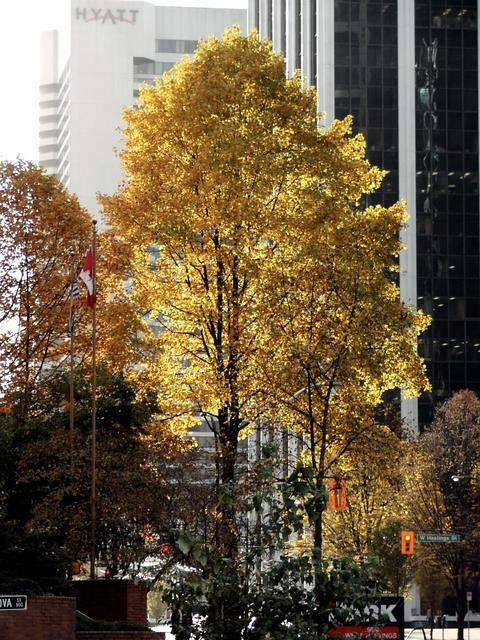 Fall in downtown Vancouver