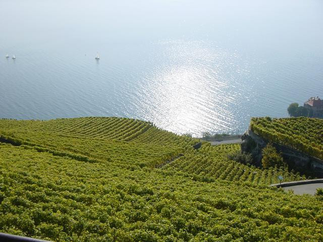 Switzerland Vineyard and lake