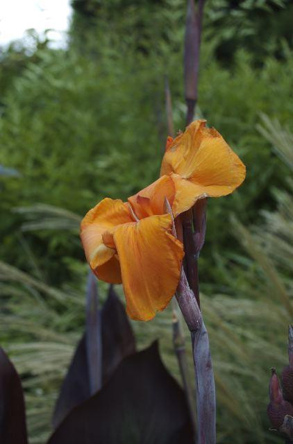 Flower in botanic gardens