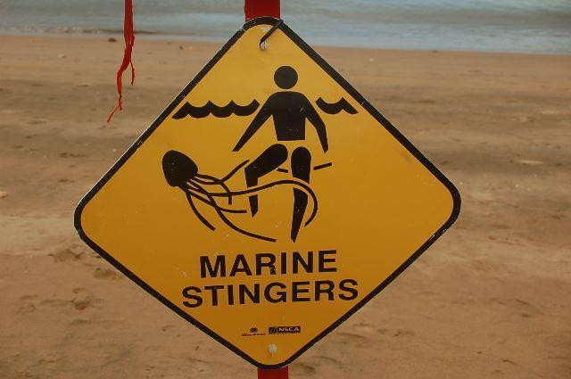 Marine Stingers