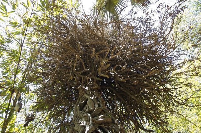 Weird branches