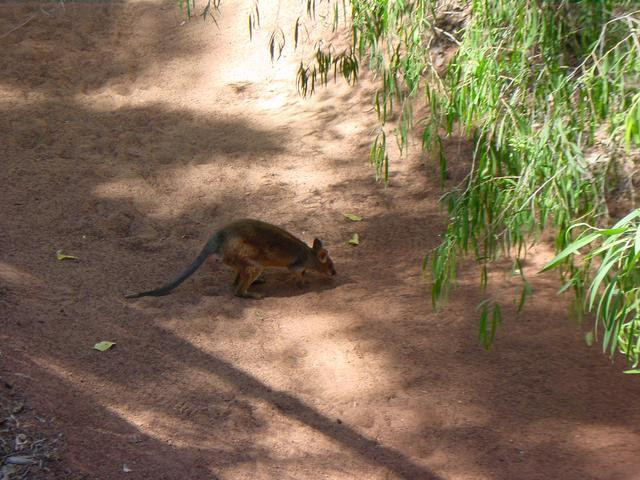 A very small marsupial
