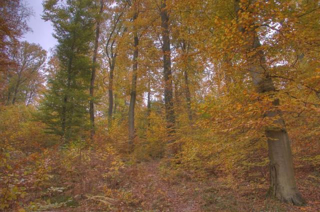 Luxembourg Forest: fall