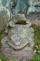Frog, or toad?