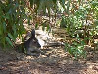 Kangaroo! The first one I saw :)