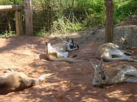 In fact, they usually relax in the shade in order to escape from the heat during daytime.