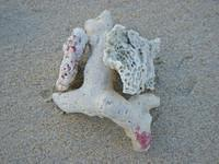 Once arrived in Punta Cana (OK it was not Punta Cana but very close on the North), there was a lot of coral on the beach.
