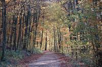 Forest in Dudelange during autumn